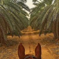 Мир между конских ушей  - фото 19396956_1320839261333487_568597933172146673_n-200x200, главная Фото , конный журнал EquiLIfe