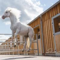 Кристиане Славик (Christiane Slawik)  - фото 20861876_1684903418210062_7480280764959947249_o-200x200, главная Фото , конный журнал EquiLIfe