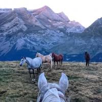 Мир между конских ушей  - фото 20953179_1376805325736880_3960866842001093813_n-200x200, главная Фото , конный журнал EquiLIfe