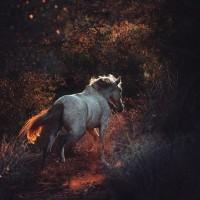 Кристиане Славик (Christiane Slawik)  - фото 3_8-200x200, главная Фото , конный журнал EquiLIfe