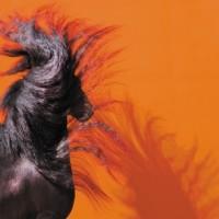 Кристиане Славик (Christiane Slawik)  - фото 4753-200x200, главная Фото , конный журнал EquiLIfe