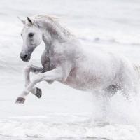 Кристиане Славик (Christiane Slawik)  - фото 4_16-200x200, главная Фото , конный журнал EquiLIfe