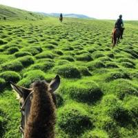 Мир между конских ушей  - фото 4jPq56wrWcE-200x200, главная Фото , конный журнал EquiLIfe
