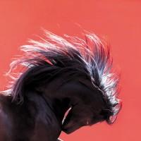 Кристиане Славик (Christiane Slawik)  - фото 5820-200x200, главная Фото , конный журнал EquiLIfe
