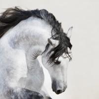 Кристиане Славик (Christiane Slawik)  - фото 5_15-200x200, главная Фото , конный журнал EquiLIfe
