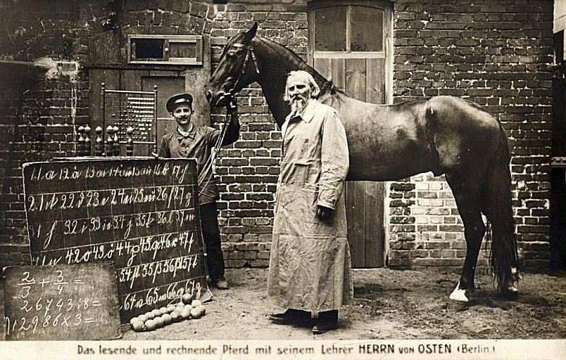 Умный Ганс - фото 60, Recommendation главная Разное , конный журнал EquiLIfe