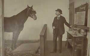 800px-Krall_Zarif_lernt_buchstabieren - фото 800px-Krall_Zarif_lernt_buchstabieren-300x187, , конный журнал EquiLIfe