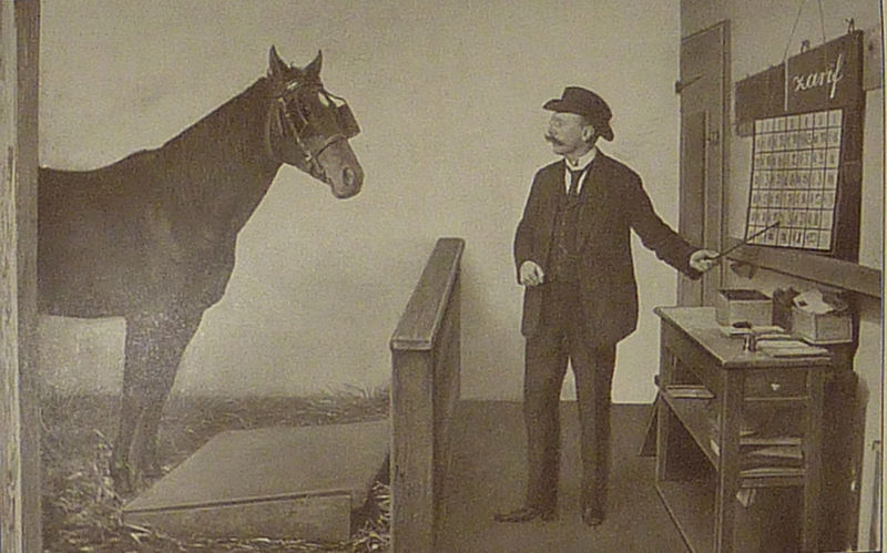 Умные лошади Карла Кралля - фото 800px-Krall_Zarif_lernt_buchstabieren, главная Разное , конный журнал EquiLIfe