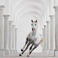 Кристиане Славик (Christiane Slawik)  - фото 957_photo_loshadey-1-200x200, главная Фото , конный журнал EquiLIfe