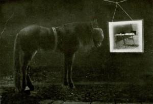 AAcfmB61PSw - фото AAcfmB61PSw-300x203, , конный журнал EquiLIfe
