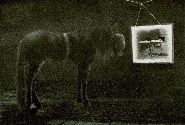 Умный Ганс - фото AAcfmB61PSw, главная Разное , конный журнал EquiLIfe