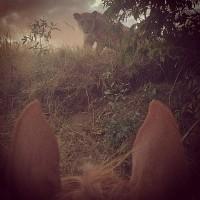 Мир между конских ушей  - фото AS3mdzS_OPM-200x200, главная Фото , конный журнал EquiLIfe