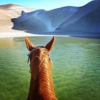 Мир между конских ушей  - фото F4Itxe5b9TE-200x200, главная Фото , конный журнал EquiLIfe
