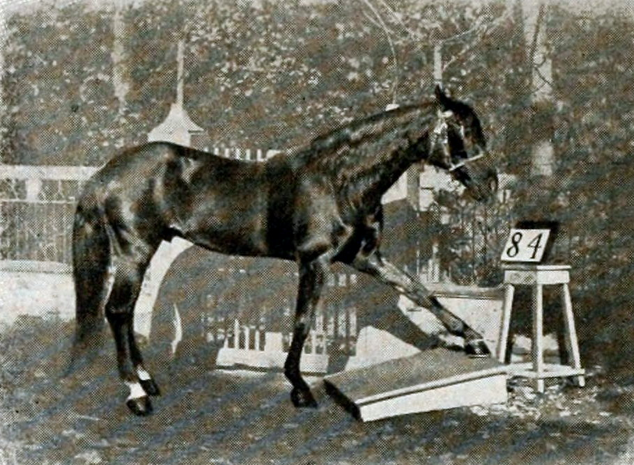 Умный Ганс - фото Hans_am_Tretbrett, главная Разное , конный журнал EquiLIfe