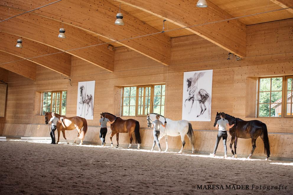 Аня Беран Workshop-2017 - фото MMD4460, Аня Беран главная События Тренинг , конный журнал EquiLIfe