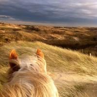 Мир между конских ушей  - фото N17FoFlsaQM-200x200, главная Фото , конный журнал EquiLIfe