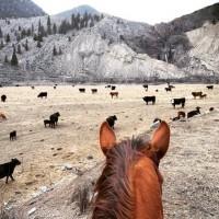 Мир между конских ушей  - фото Sguq9xXymiM-200x200, главная Фото , конный журнал EquiLIfe