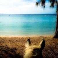Мир между конских ушей  - фото T2qNA_a7Rog-200x200, главная Фото , конный журнал EquiLIfe