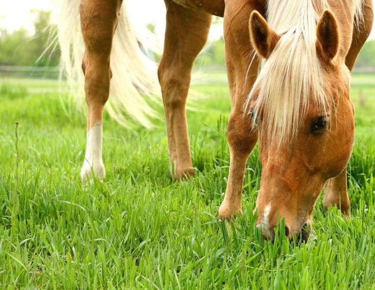 Химический состав кормов для лошадей ч. 1 - фото canstock_spring_horse-web, главная Рацион , конный журнал EquiLIfe