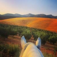 Мир между конских ушей  - фото da5A9D7uwVk-200x200, главная Фото , конный журнал EquiLIfe