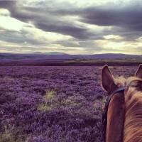 Мир между конских ушей  - фото hGg2tC2smwg-200x200, главная Фото , конный журнал EquiLIfe