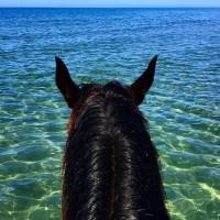 Мир между конских ушей  - фото hfIwW8NtpcE-200x200, главная Фото , конный журнал EquiLIfe