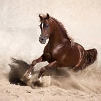 Кристиане Славик (Christiane Slawik)  - фото i-200x200, главная Фото , конный журнал EquiLIfe