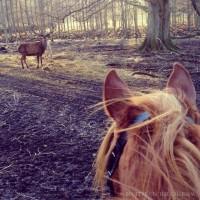 Мир между конских ушей  - фото i9fq8a6E-GY-200x200, главная Фото , конный журнал EquiLIfe