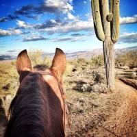 Мир между конских ушей  - фото r207qV3codA-200x200, главная Фото , конный журнал EquiLIfe