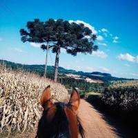 Мир между конских ушей  - фото x9wzjYot3tM-200x200, главная Фото , конный журнал EquiLIfe