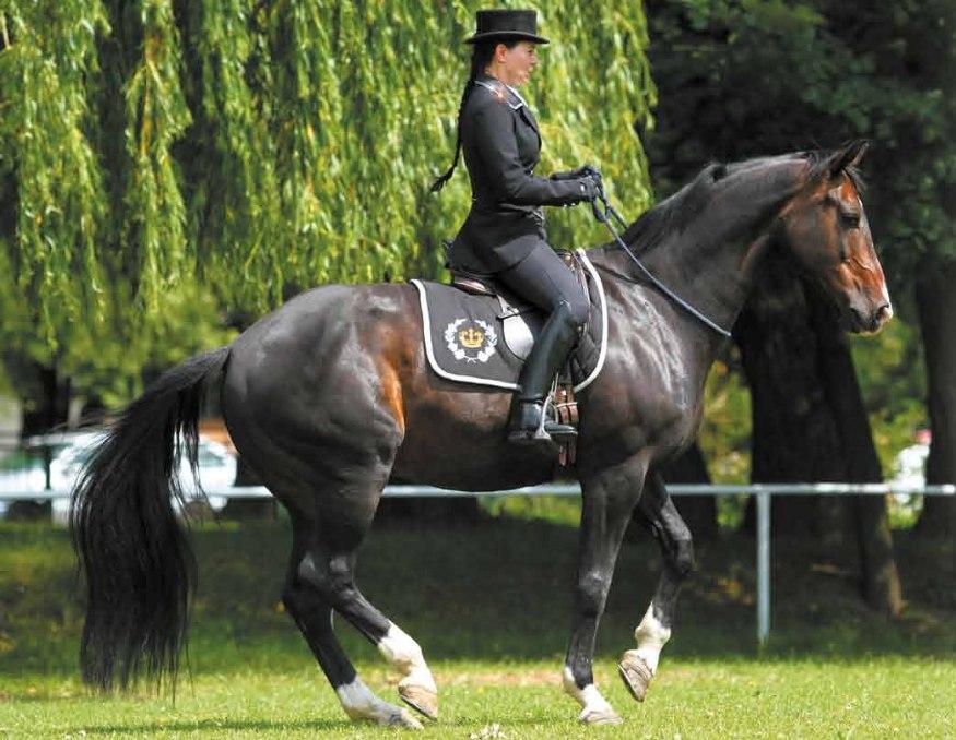 Национальный чемпионат по верховой езде без уздечек пройдёт в Польше - фото 89NR6h4InMk, Новости , конный журнал EquiLIfe