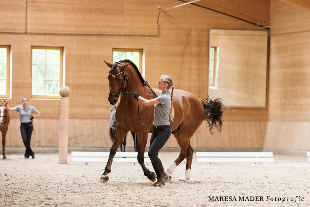 Интервью с Kathrin Roida. Работа с лошадью в руках - фото MMD4701, главная Интервью , конный журнал EquiLIfe