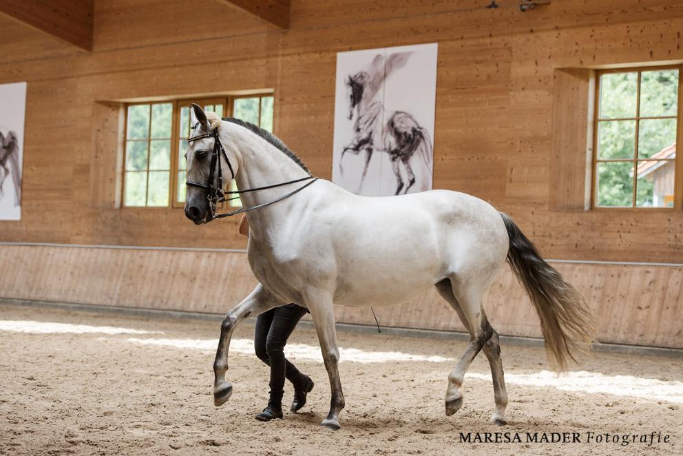 Интервью с Kathrin Roida. Работа с лошадью в руках - фото MMD4827, главная Интервью , конный журнал EquiLIfe