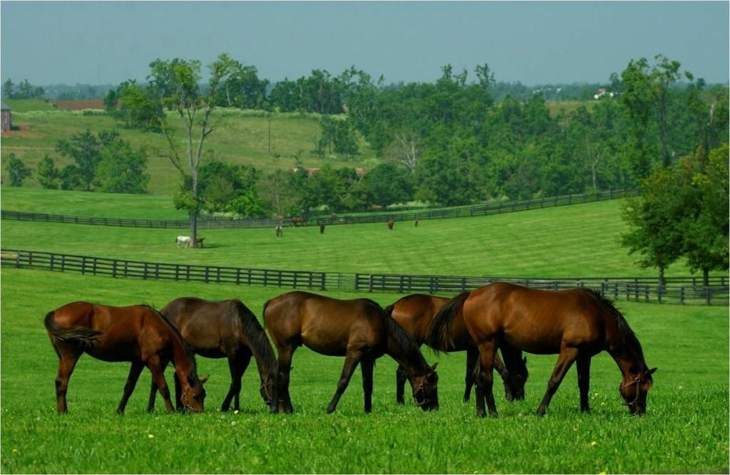 Химический состав кормов для лошадей ч. 2 - фото 18.-выпас-1024x667, главная Рацион , конный журнал EquiLIfe