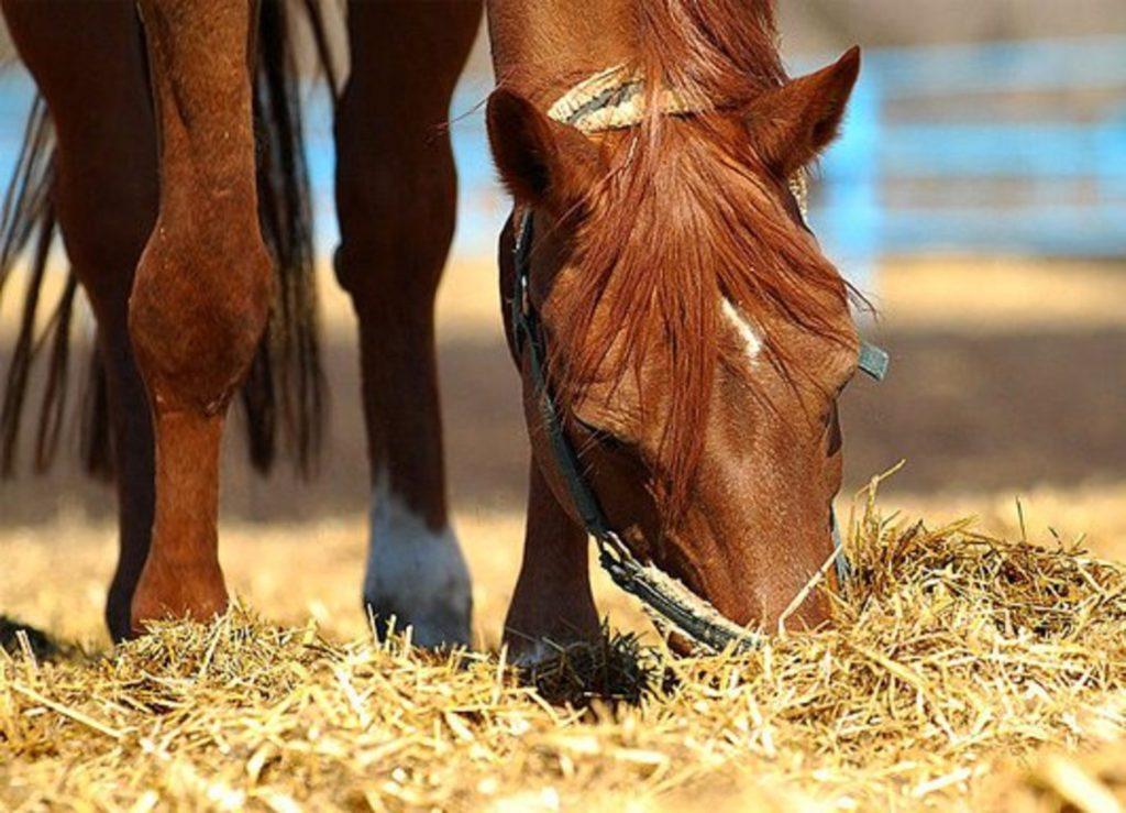 Химический состав кормов для лошадей ч. 3 - фото 21-15-1024x739, главная Рацион , конный журнал EquiLIfe