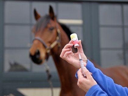 Как приучить лошадь в визитам ветеринара? - фото 2898cdf8ade782d01cfbd8da1d41a7d0-horse-behavior-horse-care, главная Тренинг , конный журнал EquiLIfe