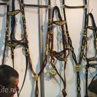 ЭКВИРОС осень 2017: фотоотчет - фото IMG_8240_wm-200x200, главная События Фото , конный журнал EquiLIfe