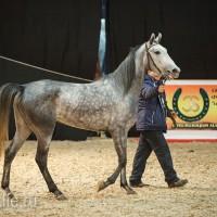 ЭКВИРОС осень 2017: фотоотчет - фото IMG_8241_wm-200x200, главная События Фото , конный журнал EquiLIfe