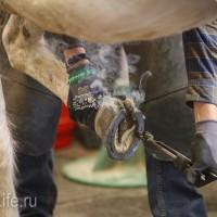 ЭКВИРОС осень 2017: фотоотчет - фото IMG_8433_wm-200x200, главная События Фото , конный журнал EquiLIfe