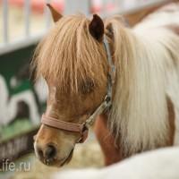 ЭКВИРОС осень 2017: фотоотчет - фото IMG_8533_wm-200x200, главная События Фото , конный журнал EquiLIfe