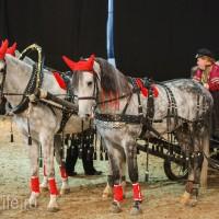 ЭКВИРОС осень 2017: фотоотчет - фото IMG_8547_wm-200x200, главная События Фото , конный журнал EquiLIfe