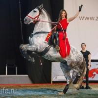 ЭКВИРОС осень 2017: фотоотчет - фото IMG_8930_wm-200x200, главная События Фото , конный журнал EquiLIfe