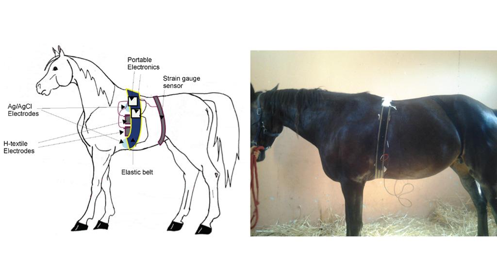 Новости науки: эмоциональная связь между человеком и лошадью существует! - фото o_1476860, главная Новости , конный журнал EquiLIfe