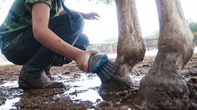 Вся ПРАВДА О МОКРЕЦАХ 1. Страшна ли грязь? - фото 416-Ковбойский-лагерь-800x531, главная Здоровье лошади Копыта , конный журнал EquiLIfe