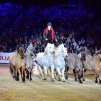 Пьер Флёри (Pierre Fleury) - фото 10330228_1124876340877043_4578291748035216476_n-200x200, главная Разное Фото , конный журнал EquiLIfe