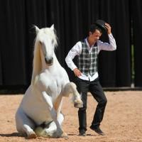 Пьер Флёри (Pierre Fleury) - фото 10440979_975233062508039_4338703592134486022_n-200x200, главная Разное Фото , конный журнал EquiLIfe