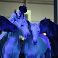 Пьер Флёри (Pierre Fleury) - фото 10982132_975234545841224_8682295642859484097_n-200x200, главная Разное Фото , конный журнал EquiLIfe