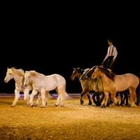 Пьер Флёри (Pierre Fleury) - фото 11248803_975226859175326_1781995229350605830_n-200x200, главная Разное Фото , конный журнал EquiLIfe