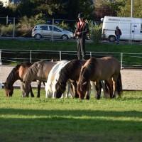 Пьер Флёри (Pierre Fleury) - фото 12027516_1049908865040458_478467774504141821_n-200x200, главная Разное Фото , конный журнал EquiLIfe