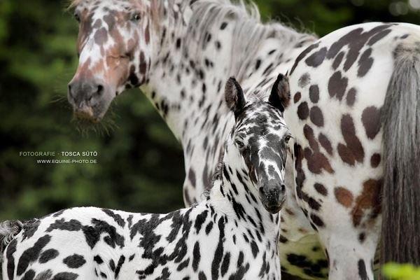 Разнообразие мастей лошадей - фото 146650416421181852, главная Интересное о лошади Разное , конный журнал EquiLIfe